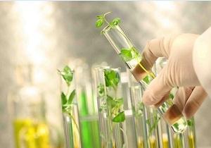 باشگاه خبرنگاران -کاهش مصرف کودهای شیمیایی در کشاورزی، اولویت ستاد زیست فناوری