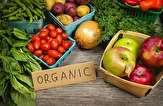 باشگاه خبرنگاران -تولید محصول سالم و ارگانیک راهی برای حضور قوی در بازارهای جهانی