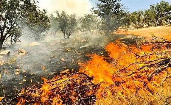 باشگاه خبرنگاران -دست آتش به پارک ملی کرخه رسید