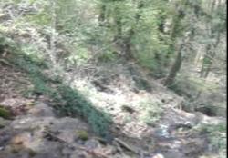 طبیعت بسیار زیبا و جذاب جنگلهای هفت خال در چهاردانگه + فیلم