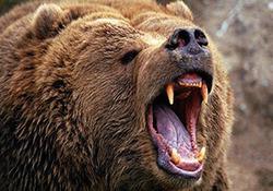 حمله خرس به یک مرد در سیرک + فیلم