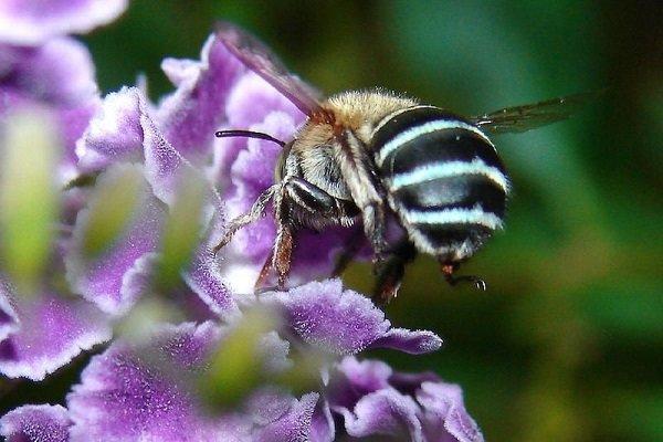 باشگاه خبرنگاران -زنبورهای عسل پلاستیک محیط زیستی تولید میکنند