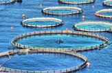 باشگاه خبرنگاران -تولید یکهزار تن ماهی در دریاچه سد کارون چهار