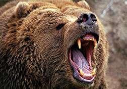 باشگاه خبرنگاران - حمله خرس به یک مرد در سیرک + فیلم