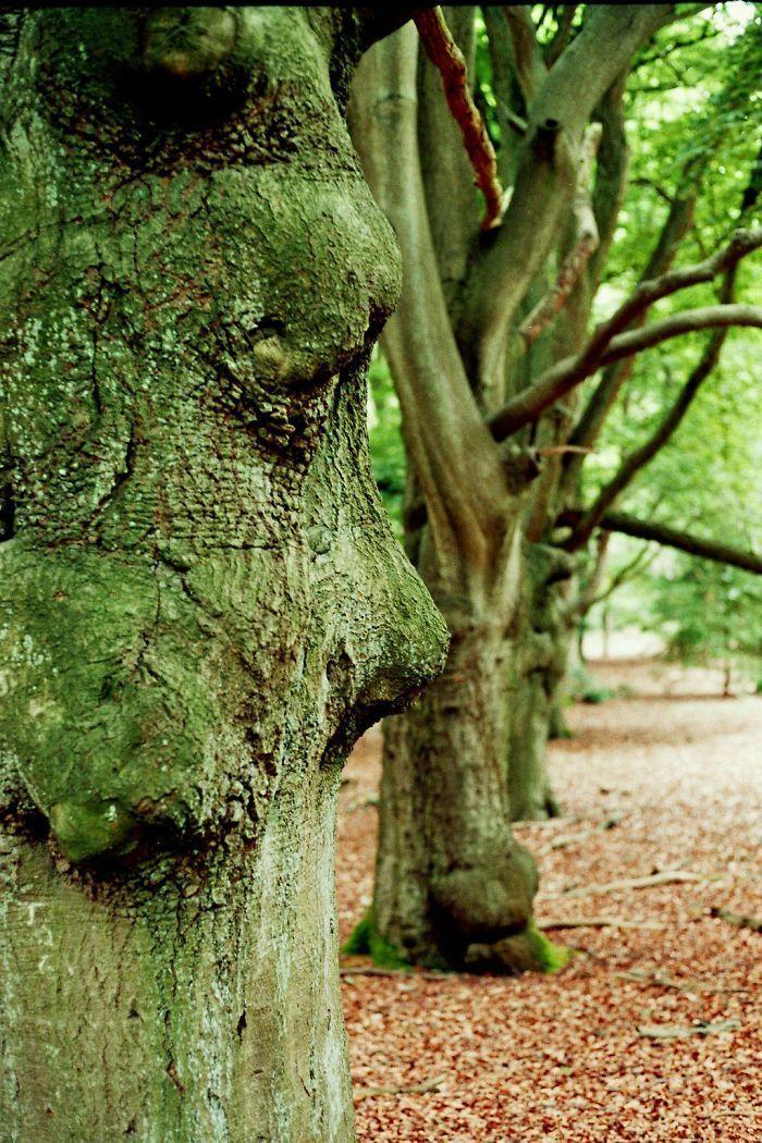 عجیبترین درختان جهان + تصاویر