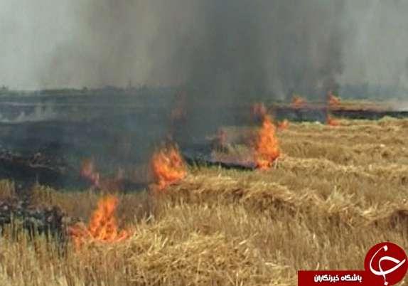 باشگاه خبرنگاران -بر باد رفتن منابع طبیعی با به آتش کشیدن بقایای گیاهی / کاه و کلش را آتش نزنید!