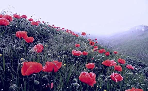 """باشگاه خبرنگاران -دیدن دشت زیبا و بینظیر گلها در """"ماسان کوپ"""" را از دست ندهید + فیلم"""