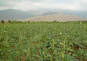 ازکشت محصولی کم توقع و پر بازده تا دهکده ای که هنوز آباد نشده است + فیلم