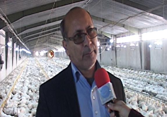 باشگاه خبرنگاران -مجوز جدیدی برای پرورش مرغ گوشتی در لرستان صادر نمی شود