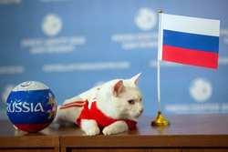 گربه روسی برنده دیدار ایران - اسپانیا را پیش بینی کرد