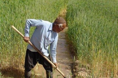 باشگاه خبرنگاران -تلاش برای تامین نیازهای کشاورزان