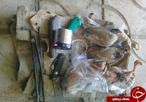  پخش صدای پرندگان و شکار آن ها/شکارچیان پرندگان وحشی شکار شدند