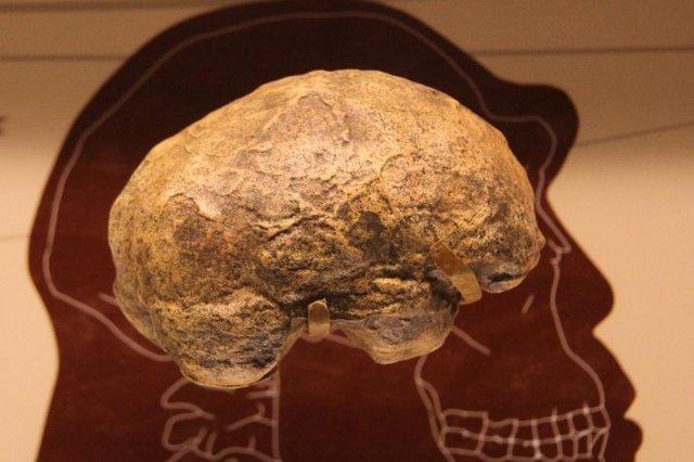 مغز انسان چگونه 6 برابر بزرگتر از حد انتظار رشد کرد؟