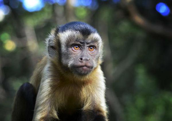 بلایی که میمون های مردم آزار، بر سر شهروندان می آورند +