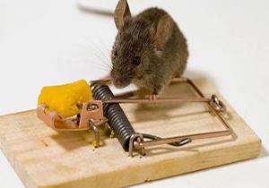 حرکت تله موش با سرعت آهسته + فیلم