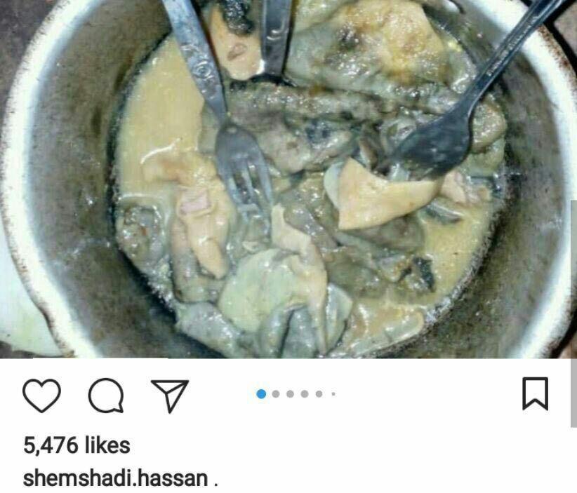 ماجرای خوردن «گوشت گربه» و «کلاغ مرده» در جنوب ایران چیست؟
