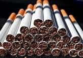 باشگاه خبرنگاران -کشف بیش از ۴۴ هزار نخ سیگار قاچاق در بندرگز