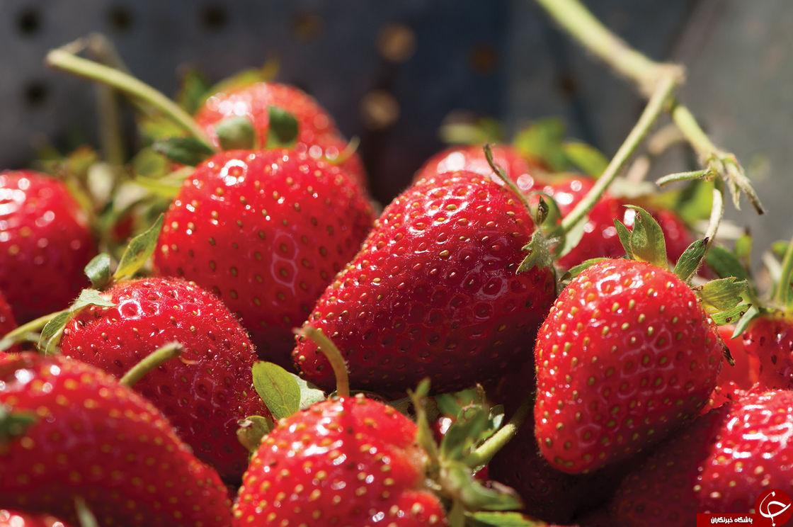 خواص توت فرنگی/ خاصیت های عجیب توت فرنگی برای پوست وسلامت بدن