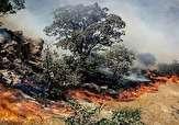"""باشگاه خبرنگاران -آتشسوزی جنگلهای بلوط در """"بهمئی"""" + فیلم"""