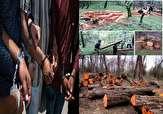 باشگاه خبرنگاران -دستگیری ۱۰۶ قاچاقچی چوب دو ماه گذشته در مازندران