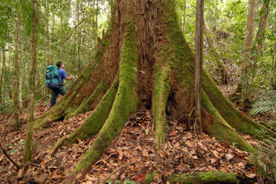واقعیتی عجیب و حیرت انگیز درباره درختان که شگفت زده تان می کند