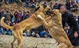 باشگاه خبرنگاران -لایحه حمایت از حیوانات در حال بررسی است