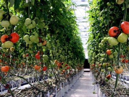 مبنای جهاد کشاورزی تولید محصولات سالم است