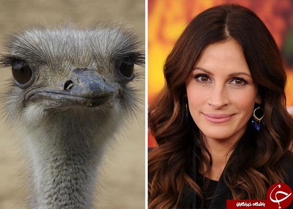 شباهت های عجیب و غریب چهره های مطرح به حیوانات+تصاویر