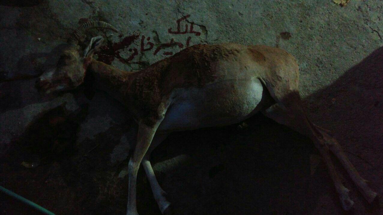 پنهانکاری کشتار هولناک حیات وحش در استان گلستان + تصاویر