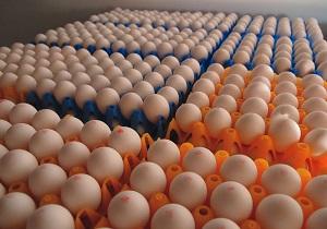 صادرات تخم مرغ به افغانستان آغاز شد/ نرخ هر کیلو تخم مرغ 5400 تومان