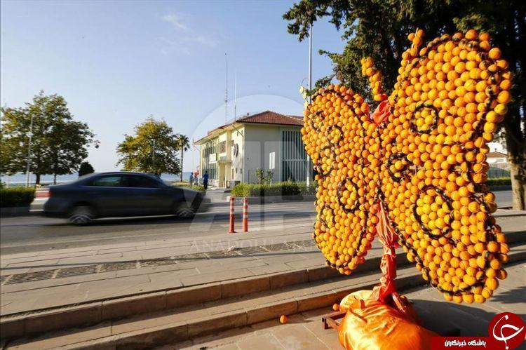 جشنواره مجسمه های ساخته شده با پرتقال و لیمو