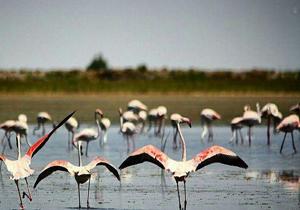 افزایش ۲۰ درصدی زادآوری پرندگان در چهارمحال و بختیاری