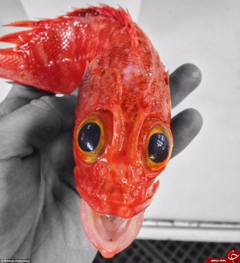 تصاویری باورنکردنی از موجودات عجیب و غریب دریایی