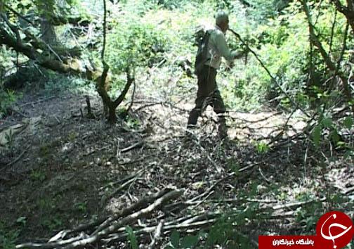 سلیقه ای که به مذاق بهره برداران از جنگل خوش نیامد