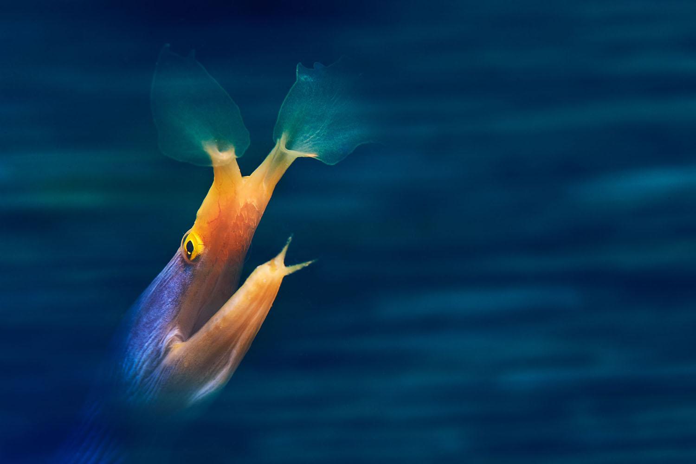برندگان مسابقه عکاسی زیر آب سال ۲۰۱۸