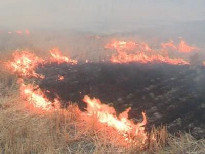 بیش از یک هکتار از مزارع روستای چناری در آتش سوخت