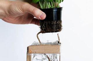 روشی کاربردی برای آب دادن به گل و گیاه +فیلم