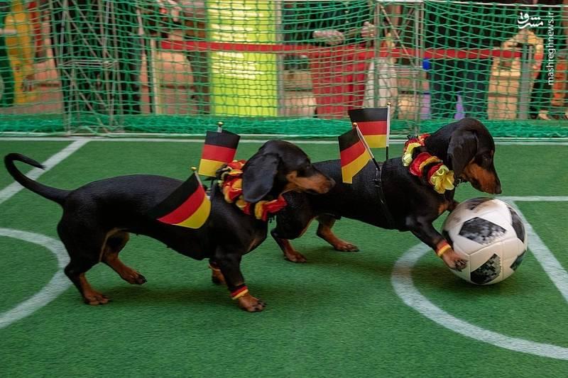 حیوانات مختلفی که جام جهانی را پیشبینی کردند+تصاویر