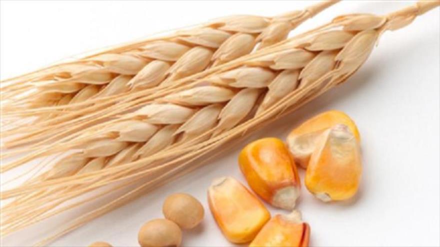 گندم و ذرت در فهرست 18 قلم کالای ممنوع صادراتی قرار گرفت