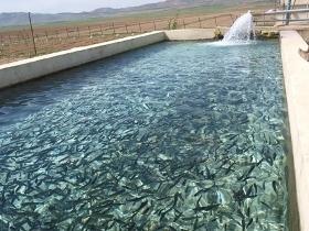 آغاز صدور پروانه صید ماهی با قلاب و تور در رودخانهها و آبهای داخلی