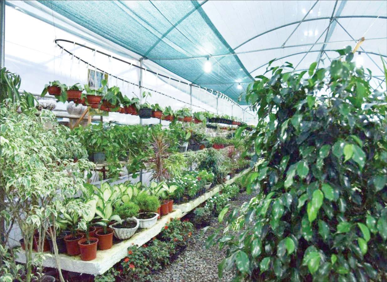 چگونه با گل و گیاهان هر ماه میتوانید پول پارو کنید؟+ جدول