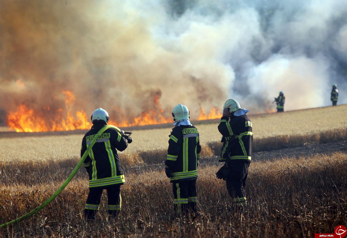 پرندهای که یک مزرعه را به آتش کشید! +تصاویر