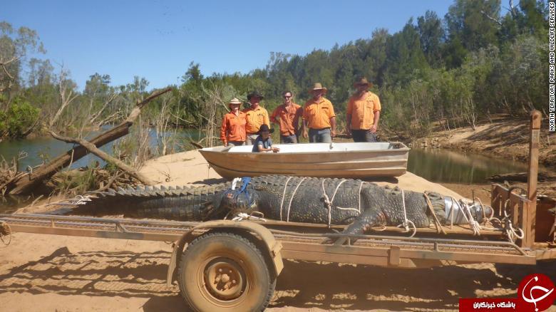 کروکودیل عظیمالجثه استرالیایی پس از ۸ سال به دام افتاد! + تصاویر