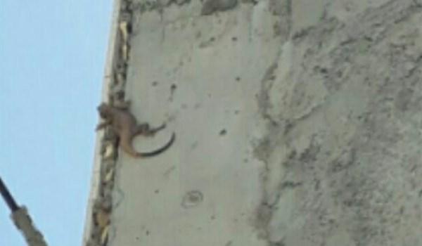 ورود مارهای سمی به منزل شهروندان خمین/ مردم به محض رویت مار با آتشنشانی تماس بگیرند