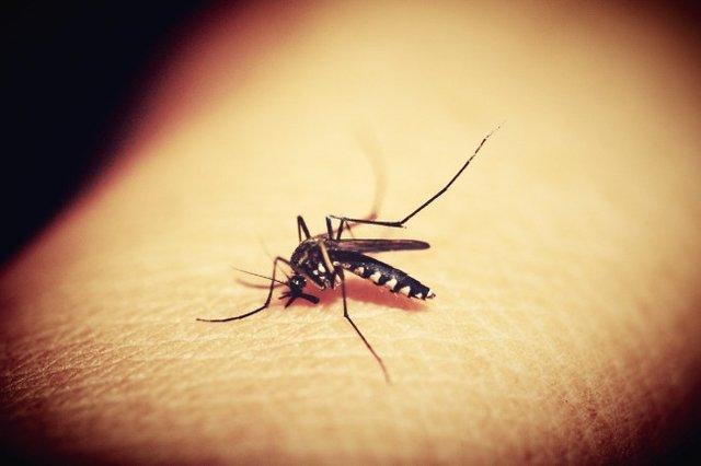 کمک 4 میلیون دلاری بیل گیتس به ریشهکن کردن مالاریا