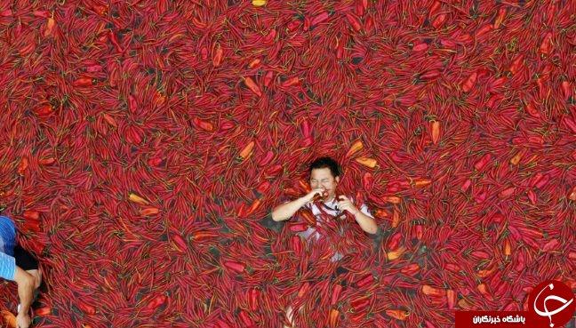 رقابت سالیانه فلفل قرمز در چین / فیلم + تصاویر