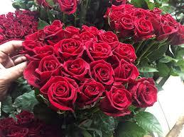 تولید سالانه بیش از۱۶میلیون شاخه گل رز،یکی از دستاوردهای مهم کشاورزی کهگیلویه وبویراحمد