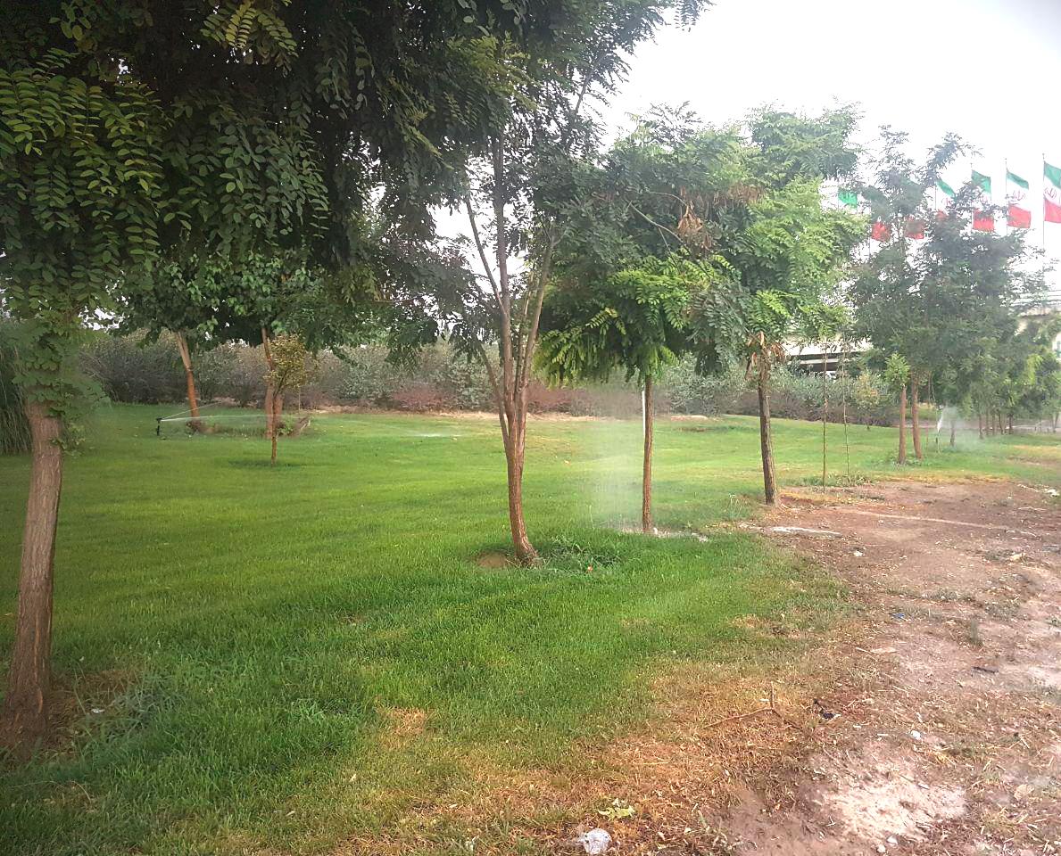 روزها آبیاری نمیکنیم/ هرگونه کاشت جدید چمن را جمعآوری میکنیم