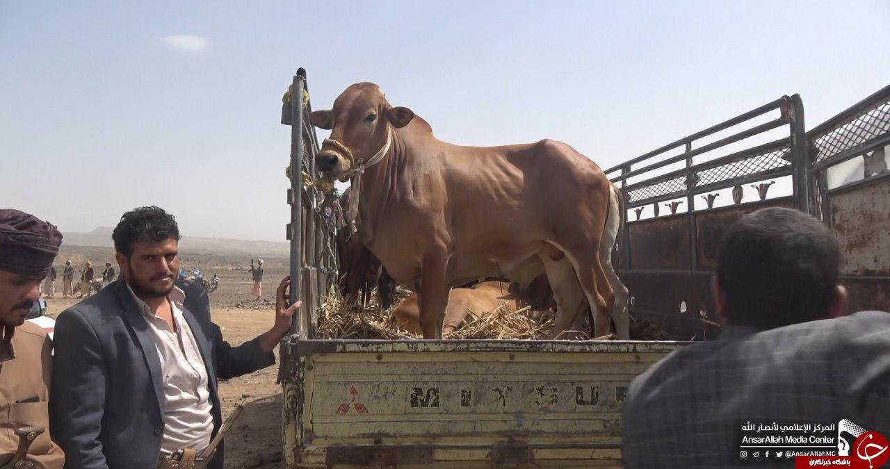 اقدام زیبا و تحسیینبرانگیز قبیله «ارحب» برای حمایت از رزمندگان یمنی+تصاویر