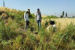 آغاز عملیات اجرایی تعیین عرصه و حریم خندان تپه در همدان